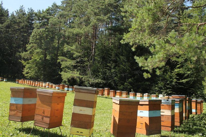 pszczoly_na_spadzi